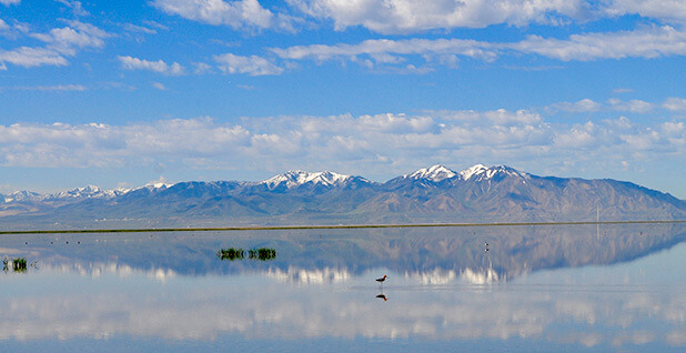 Great Salt Lake drought and biodiversity